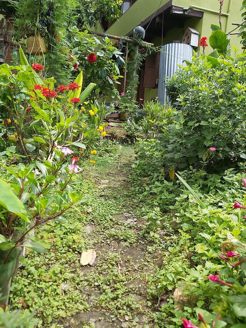800px-A_small_Garden_102535